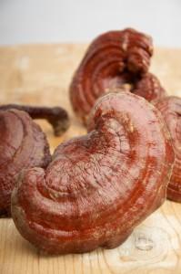 reishi, mushroom, health